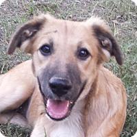 Adopt A Pet :: Tris - Preston, CT