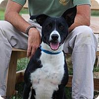 Adopt A Pet :: Obie - Elyria, OH
