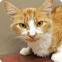 Adopt A Pet :: ADOPTED!!!   Lizzie - Plainfield, IL