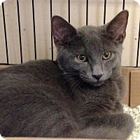 Adopt A Pet :: Abel - East Brunswick, NJ