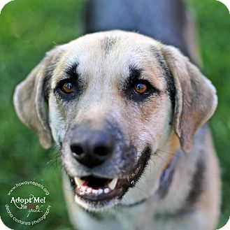 Shepherd (Unknown Type) Mix Dog for adoption in Lyons, New York - Beamer