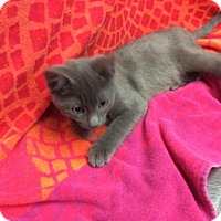 Adopt A Pet :: Waylon - Janesville, WI
