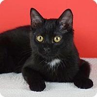 Adopt A Pet :: JD - Columbia, IL