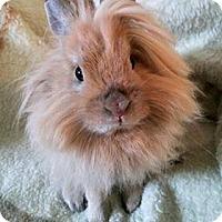 Adopt A Pet :: Lola - Winnipeg, MB