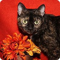 Adopt A Pet :: Sylvia (Spayed) - Marietta, OH