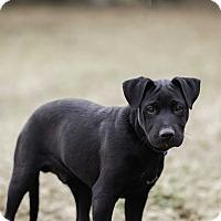 Adopt A Pet :: Axl $250 - Seneca, SC