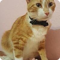Adopt A Pet :: Oliver - Sedalia, MO