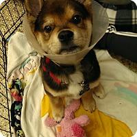 Adopt A Pet :: John - Thousand Oaks, CA