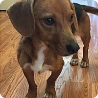 Adopt A Pet :: Nina - Plainfield, IL