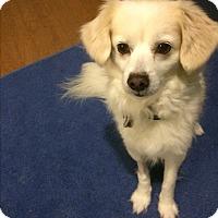 Adopt A Pet :: BOBBY - Houston, TX