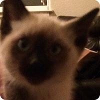 Adopt A Pet :: Noah - Eureka, CA