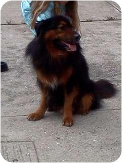 ... | Adopted Dog | Farm#8 | farmingville, NY | Rottweiler/Chow Chow Mix