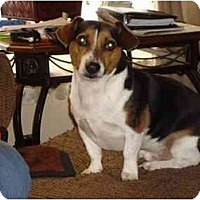 Adopt A Pet :: Copper - Wapwallopen, PA