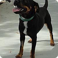 Adopt A Pet :: Mr.Magoo - Mission Viejo, CA