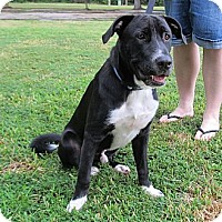 Adopt A Pet :: Franklin - Kingwood, TX