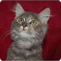 Adopt A Pet :: Gemma Belle - Chula Vista, CA