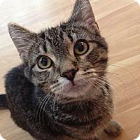 Adopt A Pet :: McKayla - Byron Center, MI
