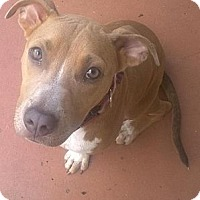 Adopt A Pet :: Reese - Hollywood, FL