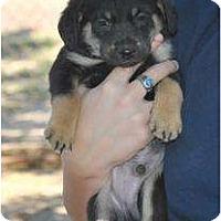 Adopt A Pet :: Mac - New Boston, NH