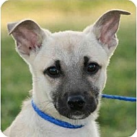Adopt A Pet :: Mickey-URGENT - kennebunkport, ME