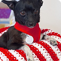 Adopt A Pet :: Tiny Tito - Knoxville, TN