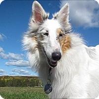 Adopt A Pet :: Pearl - Circle Pines, MN