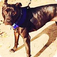 Adopt A Pet :: Lucy - Garland, TX