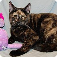 Adopt A Pet :: Triscuit - Fullerton, CA