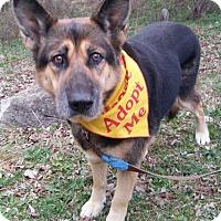 Adopt A Pet :: Charlie - Louisville, KY