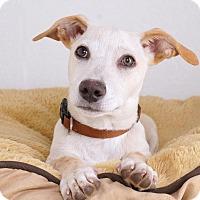 Adopt A Pet :: Jackson - Sudbury, MA