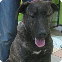 Adopt A Pet :: Lewis (ETAA) - Plainfield, CT