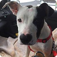 Adopt A Pet :: Petey - Homer, NY