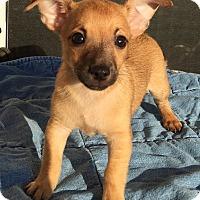 Adopt A Pet :: Dahli#3M - Orlando, FL
