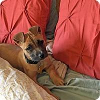 Adopt A Pet :: Gogo Tomago - Salt Lake City, UT