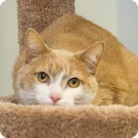 Adopt A Pet :: Maxwell - Howell, MI