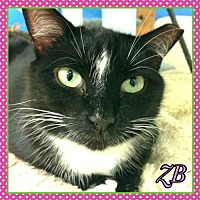 Adopt A Pet :: ZB - Huntington, NY