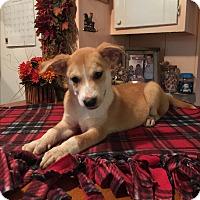 Adopt A Pet :: Landry - Kittery, ME