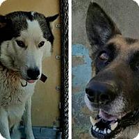 Adopt A Pet :: Gulliver & Juno - Matawan, NJ