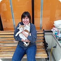Adopt A Pet :: Snuggles & Skitty - Elyria, OH