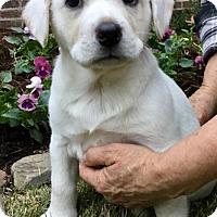 Adopt A Pet :: Zeus - Glastonbury, CT