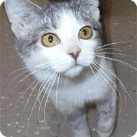 Adopt A Pet :: Zippy - Waupaca, WI