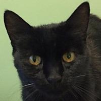 Adopt A Pet :: Lulu - Auburn, CA