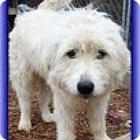 Adopt A Pet :: Fuzz - Staunton, VA
