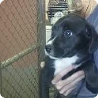 Adopt A Pet :: Hulk - Niceville, FL