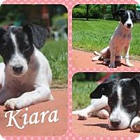 Adopt A Pet :: Kiara - DOVER, OH