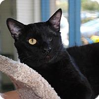 Adopt A Pet :: Patrick - Palmdale, CA