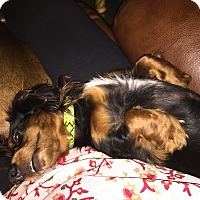 Adopt A Pet :: Ozzy - Decatur, GA