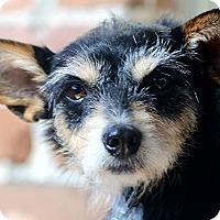 Adopt A Pet :: Trigger - Woonsocket, RI