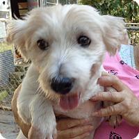 Adopt A Pet :: Kash - Crump, TN