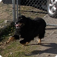 Adopt A Pet :: Mitsu - Lewisburg, TN